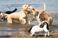 social animals - dogs playing